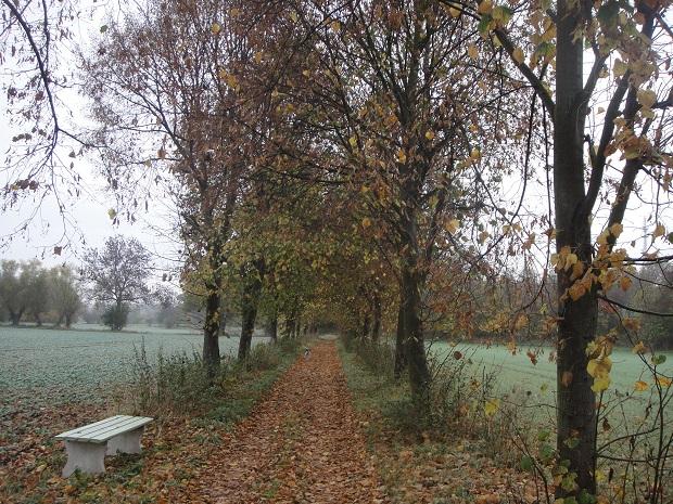 Fastenwandern Herbst
